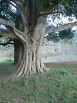 Fairytale Tree Nature Stock