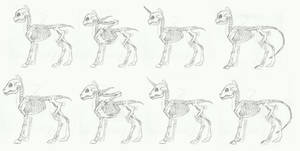 MLP- Skeleton anatomy doodle