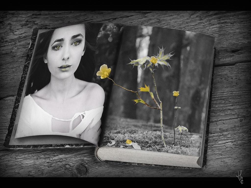 la douceur d'une fleur by ThyC-Graphics