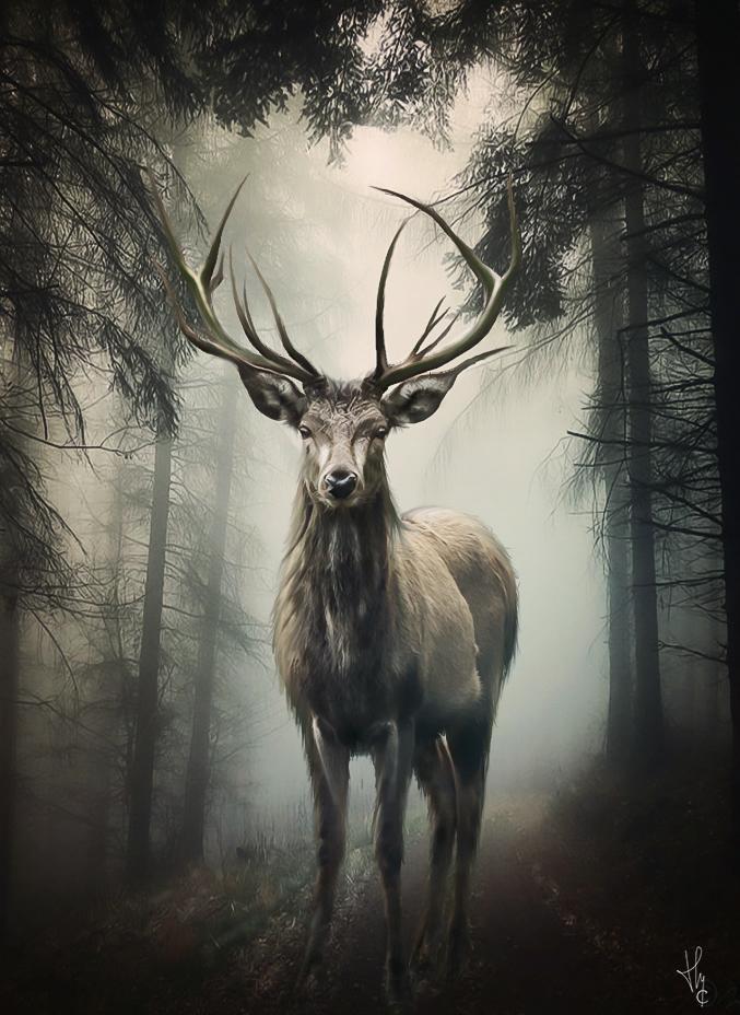 sous le bois by ThyC-Graphics