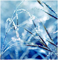 Cold Dew by dev1n