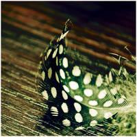 Spotty by dev1n