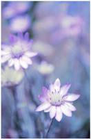 Blue clarity by dev1n