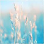 Pale feelings by dev1n