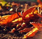 Autumn scent