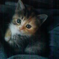 My little love by dev1n