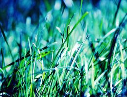 Grass by dev1n