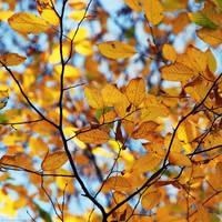 Autumn by dev1n