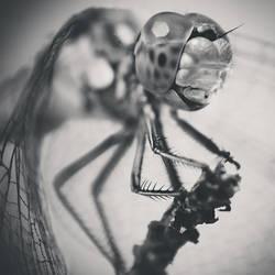 Dragonfly by dev1n