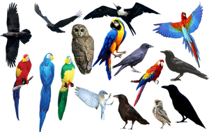 bird bird bird PNG format