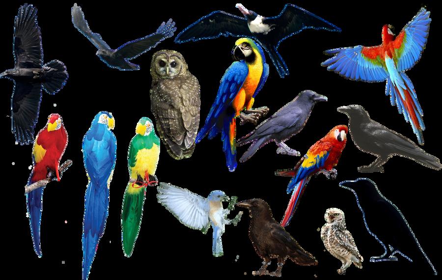 bird bird bird PNG format by Chimonk