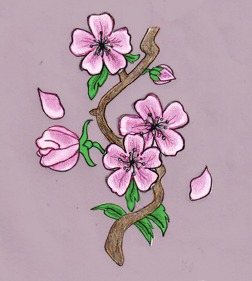 Cherry blossom drawing by hellokitten20 on deviantart for How to draw a cherry blossom step by step