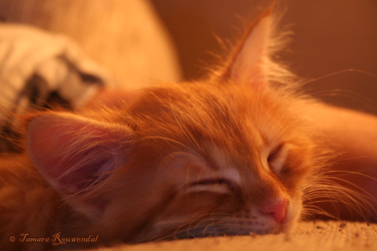 Asleep by tamaraR