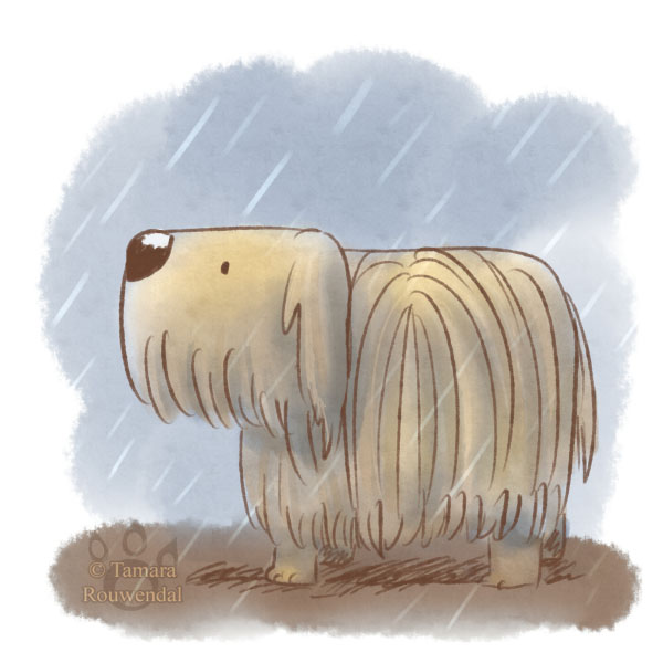 In the rain by tamaraR