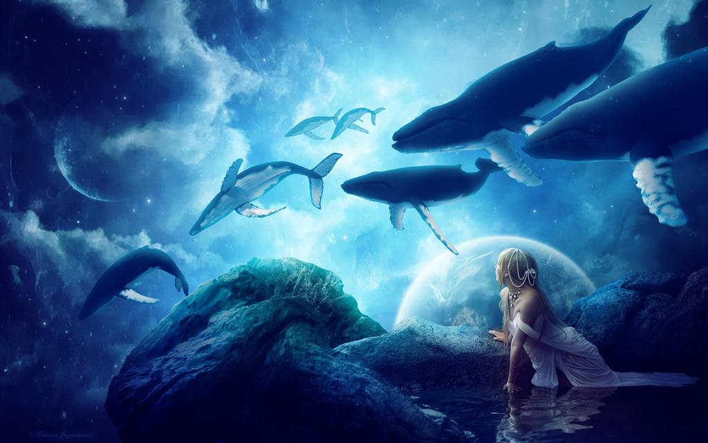 Midnight Whales by tamaraR