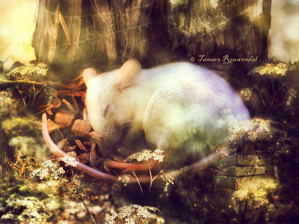 Little Summer Sunshine by tamaraR