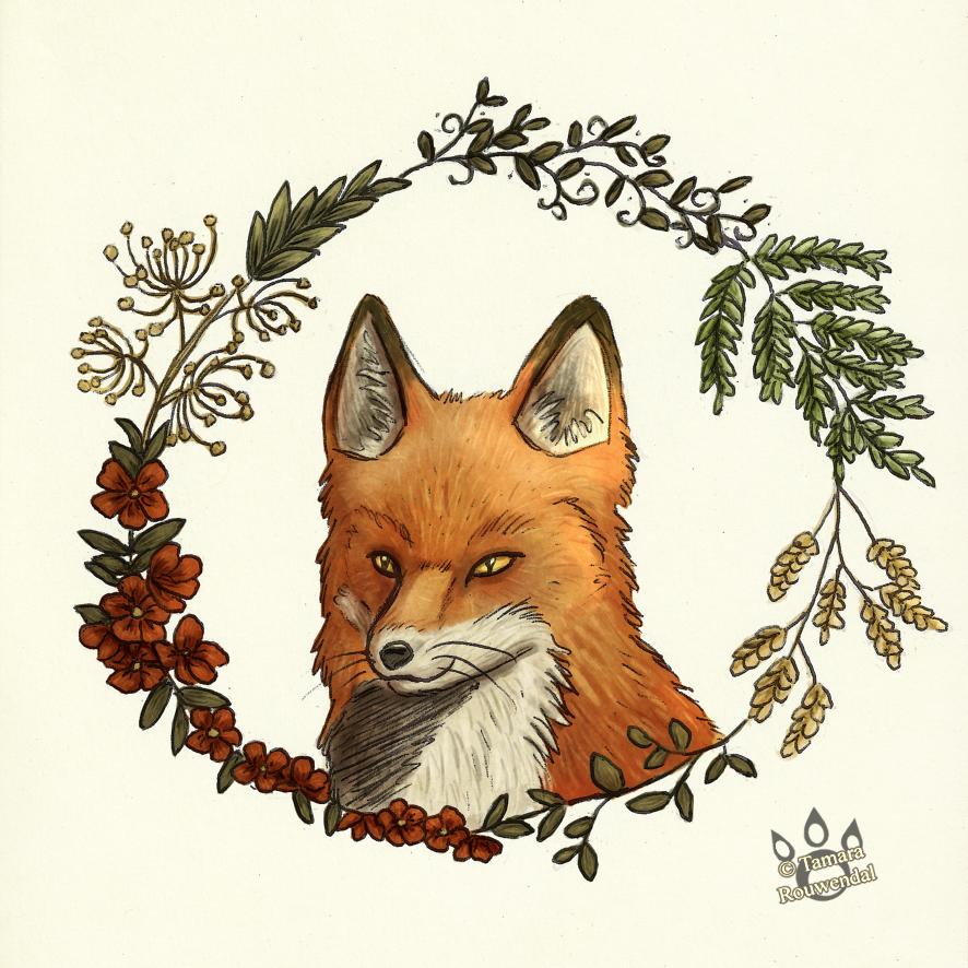The wild fox by tamaraR