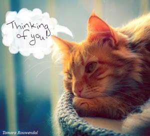 Thinking of you bink card by tamaraR
