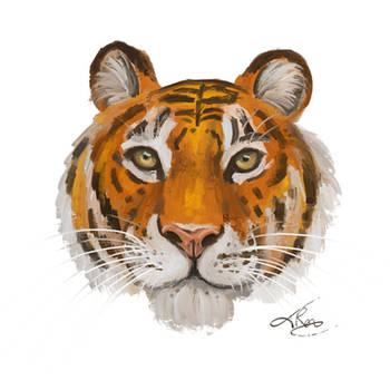 Tiger Portrait by tamaraR
