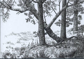 Cherry and oak tree trunks