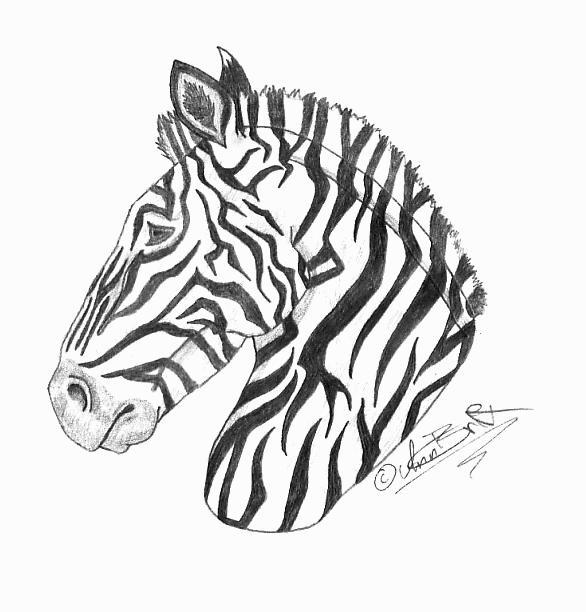 Zebra Head Pencil Drawing