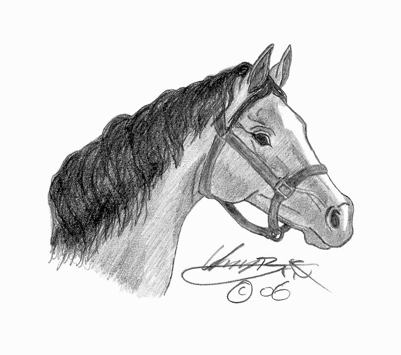 Arabian Horse Head Drawings