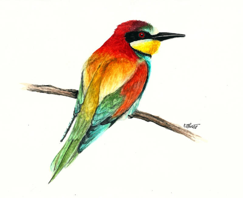 Bee-eater by Pampefox