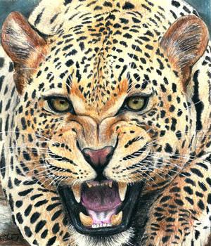 Leopard (drawing)