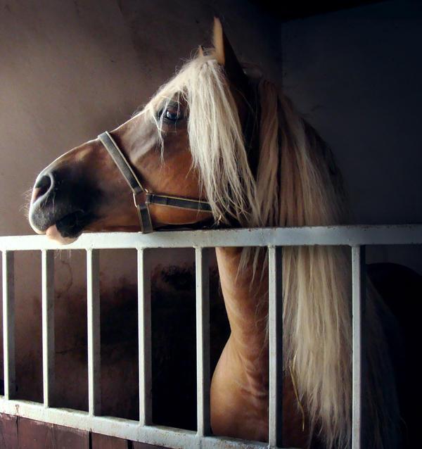 Horse. by benialicious