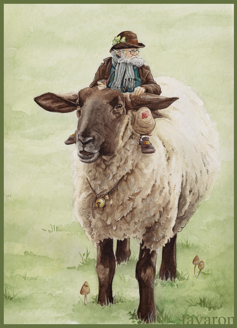 irish shepherd by tavaron on DeviantArt