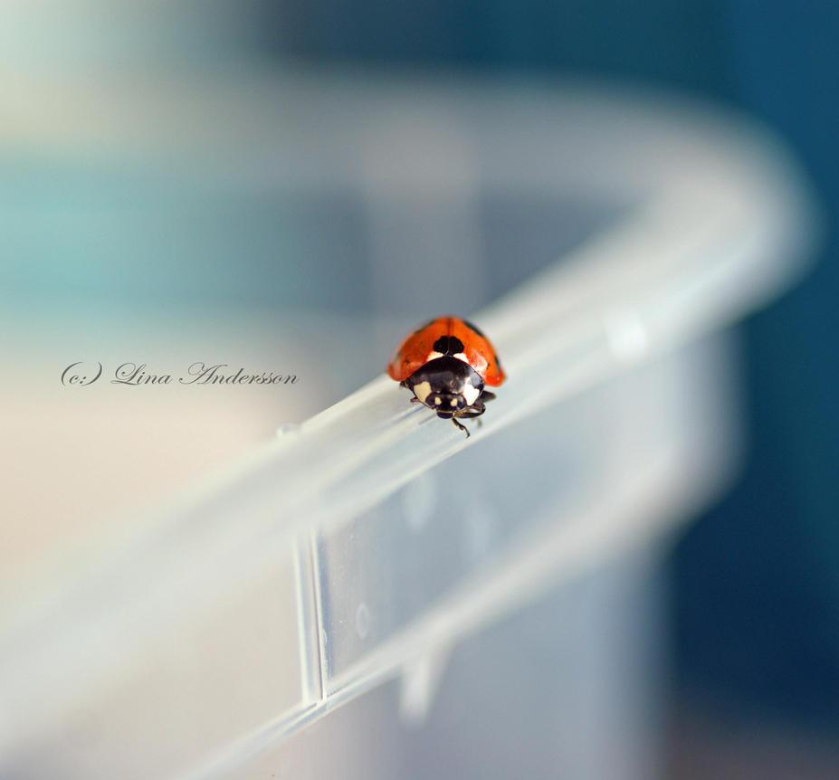 Ladybug by LilianasMidnight - u�ur b�cekli avatarlar