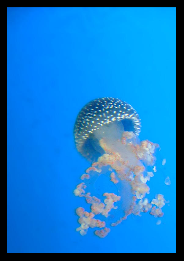 Jelly Fish by smokerette