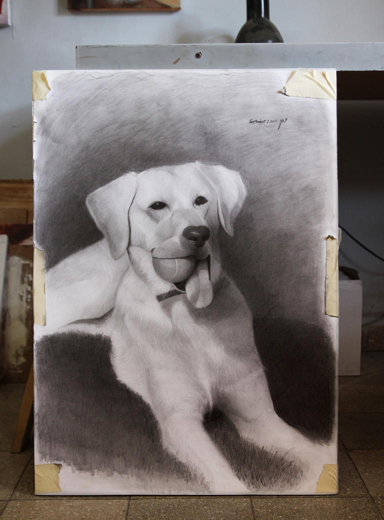 dog portrait - Oggie - Commission by roni-yoffe