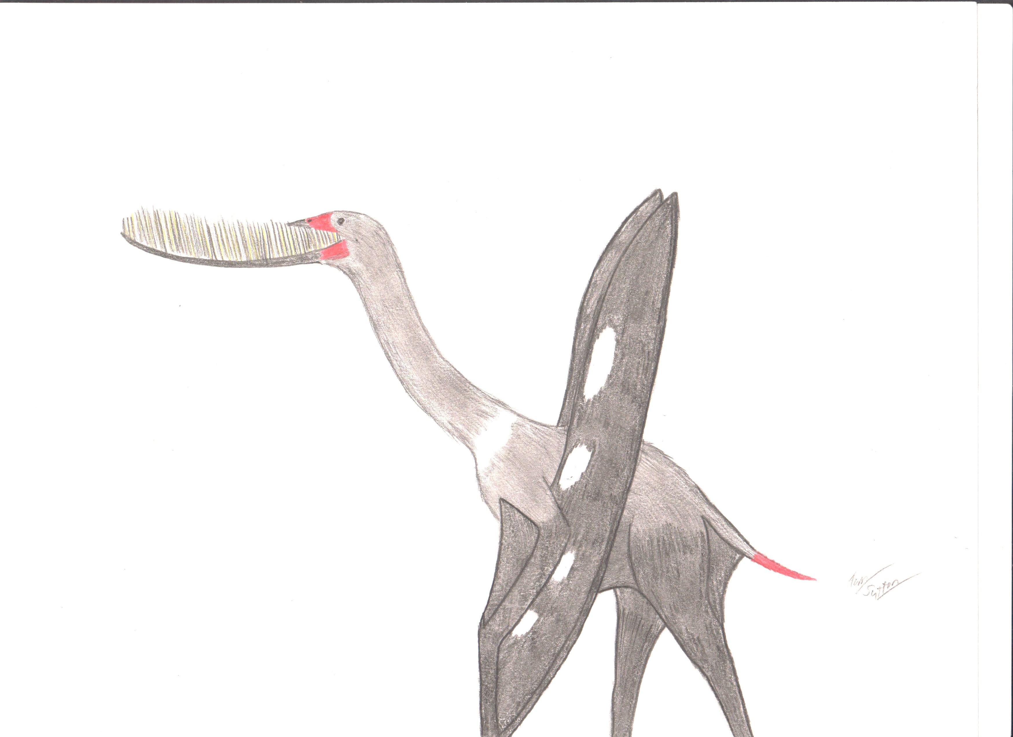 Pterodaustro guinazui by King-Edmarka