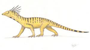 Pectenocephalus ornatus