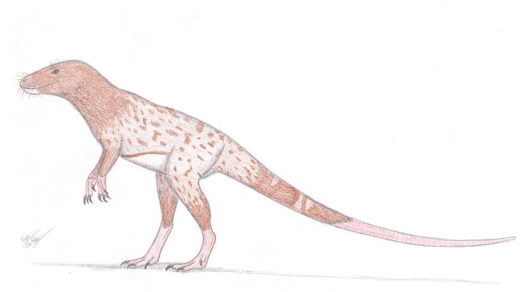 Ornithomys pictus