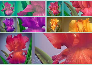 Beautiful Fantastic Irises