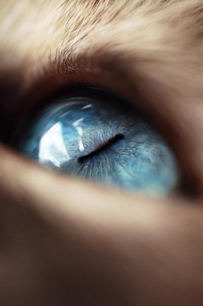 The Eye 3 by Xela02