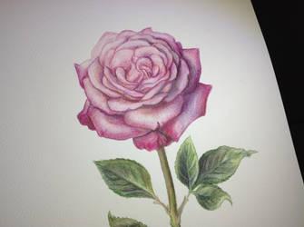english rose by tasamajamarina