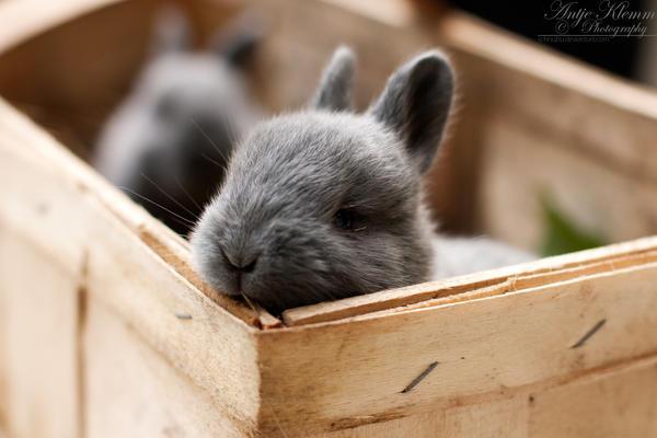 bunny by Schnubu