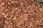 textura hojas secas by Huicha