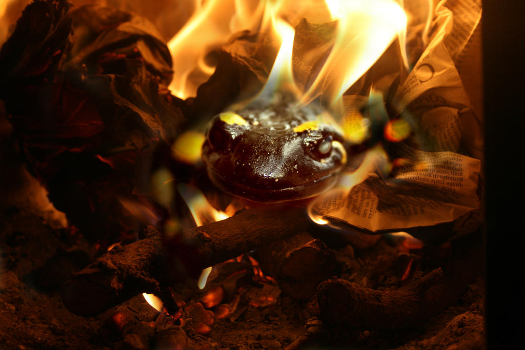 Image Result For Into The Fire