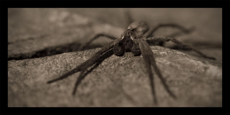 Arachnid by hellfire321