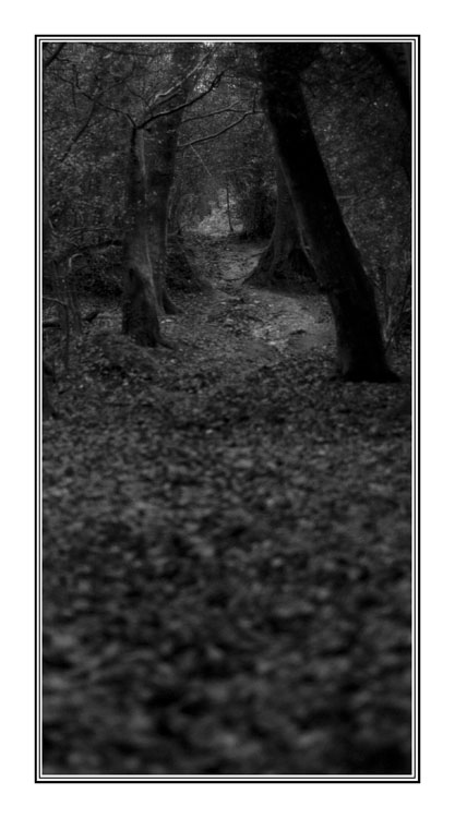 Footpath Through The Trees by hellfire321