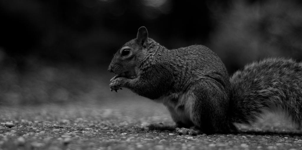 Hotham Park Squirrel by hellfire321