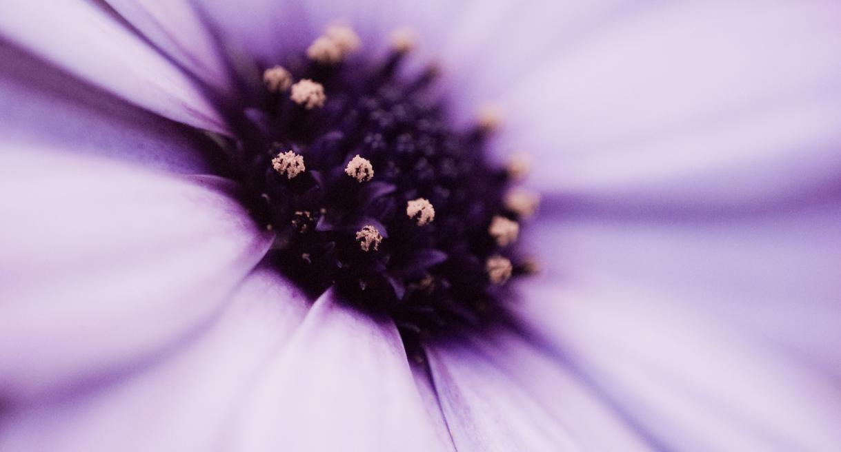 Purple Glow by hellfire321