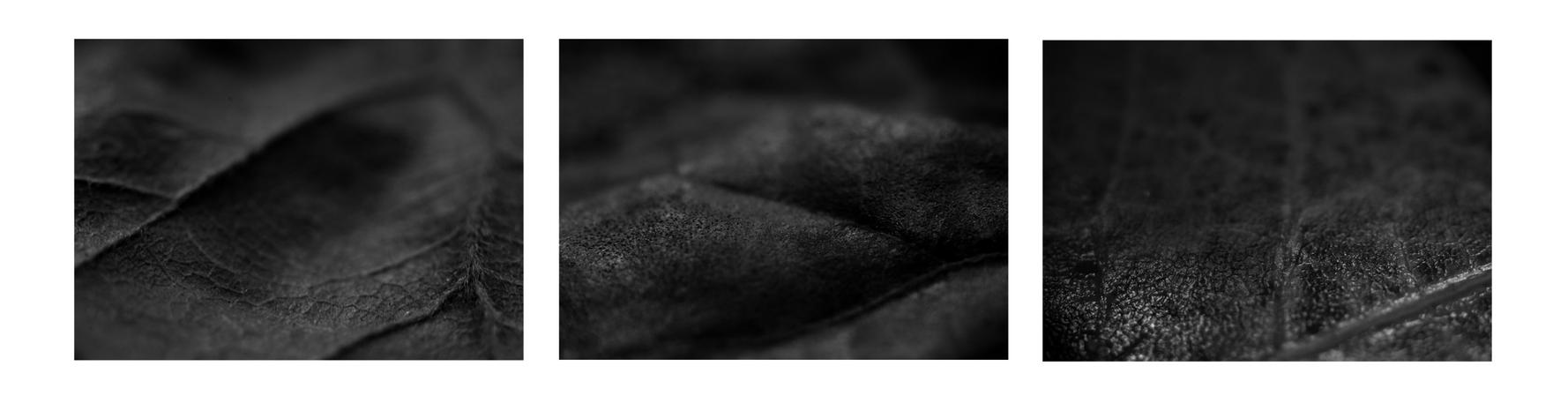 Autumn Textures by hellfire321