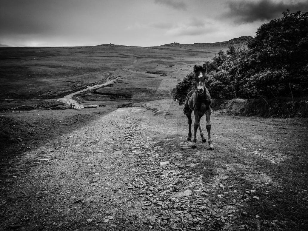 Moorland Foal by hellfire321