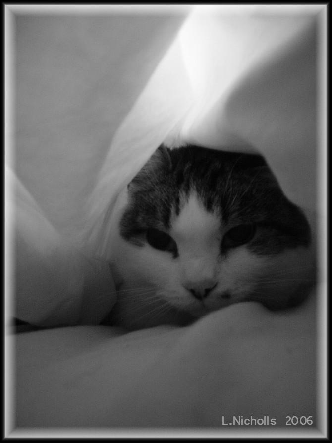 Under The Covers by hellfire321