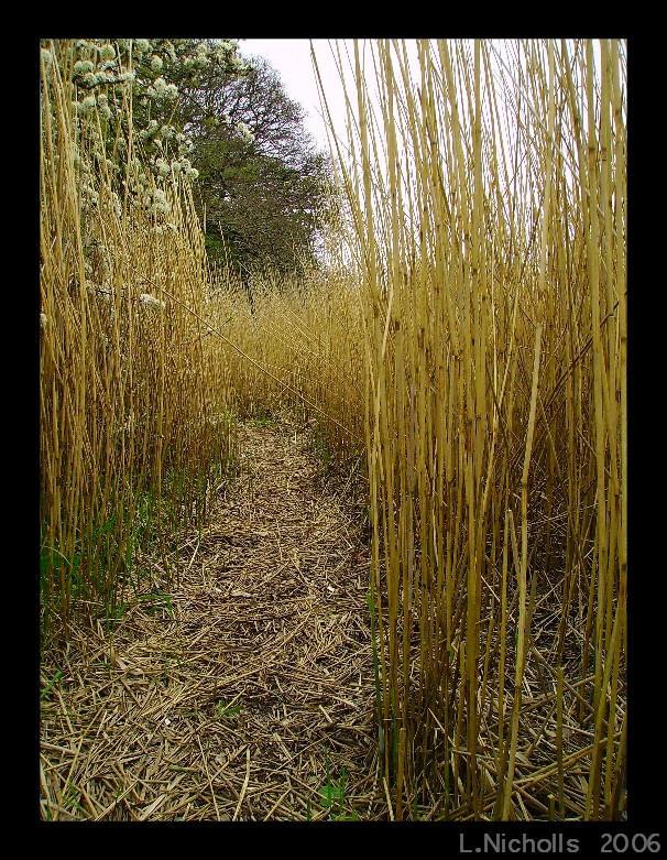 Through The Marsh by hellfire321